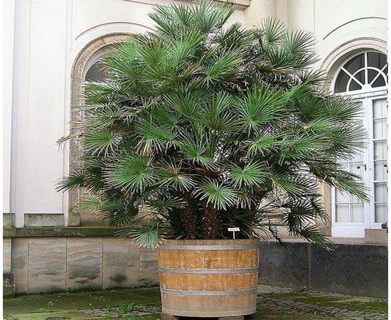 Кадка деревянная для растений. Кадка для пальмы. Кашпо для крупных растений, фото , изображение 8